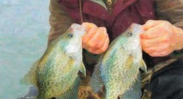 Two big crappies caught while ice fishing