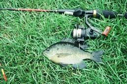 A nice panfish caught by Luba.