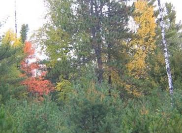 2.5 Acre Wooded Lot – Wisconsin