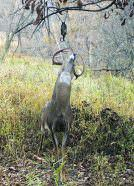 Although Magnum Scrape Drippers will freeze up in very cold temperatures, as long as the daytime highs warm above freezing and you hang them where the sun can hit them, they will continue to work; this buck loves the smell emanating from the dripper.