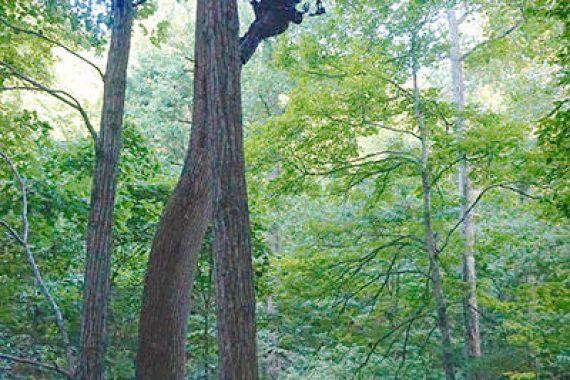 Lightweight Treestand Alternative has Advantages