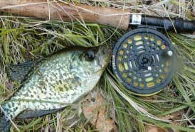 A spring crappie caught after a shoreline stalk.