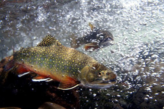 Change things up for Low-water Summer Trout