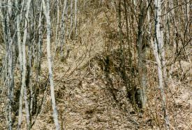 The trail to your stand site should appear to be nothing more than an ordinary deer trail.