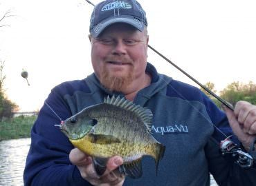 Walleyes, Bass and Bluegills Right Now!