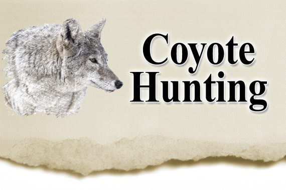 Illinois Coyotes: Time to Thin the Pack?