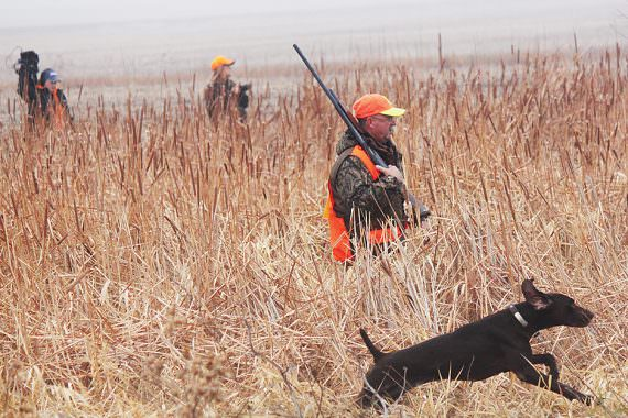 Phenomenal South Dakota Pheasant Hunt