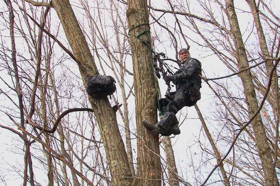 Tree Saddle Tips for Whitetail Season