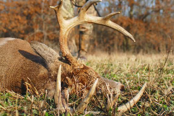 Smaller-caliber Rifles for Aging Deer Hunters
