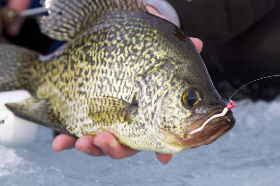 Contact Crappies