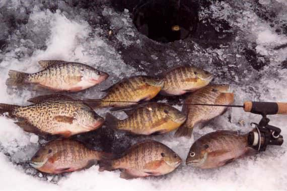 Keys to Becoming a Better Ice Fisherman