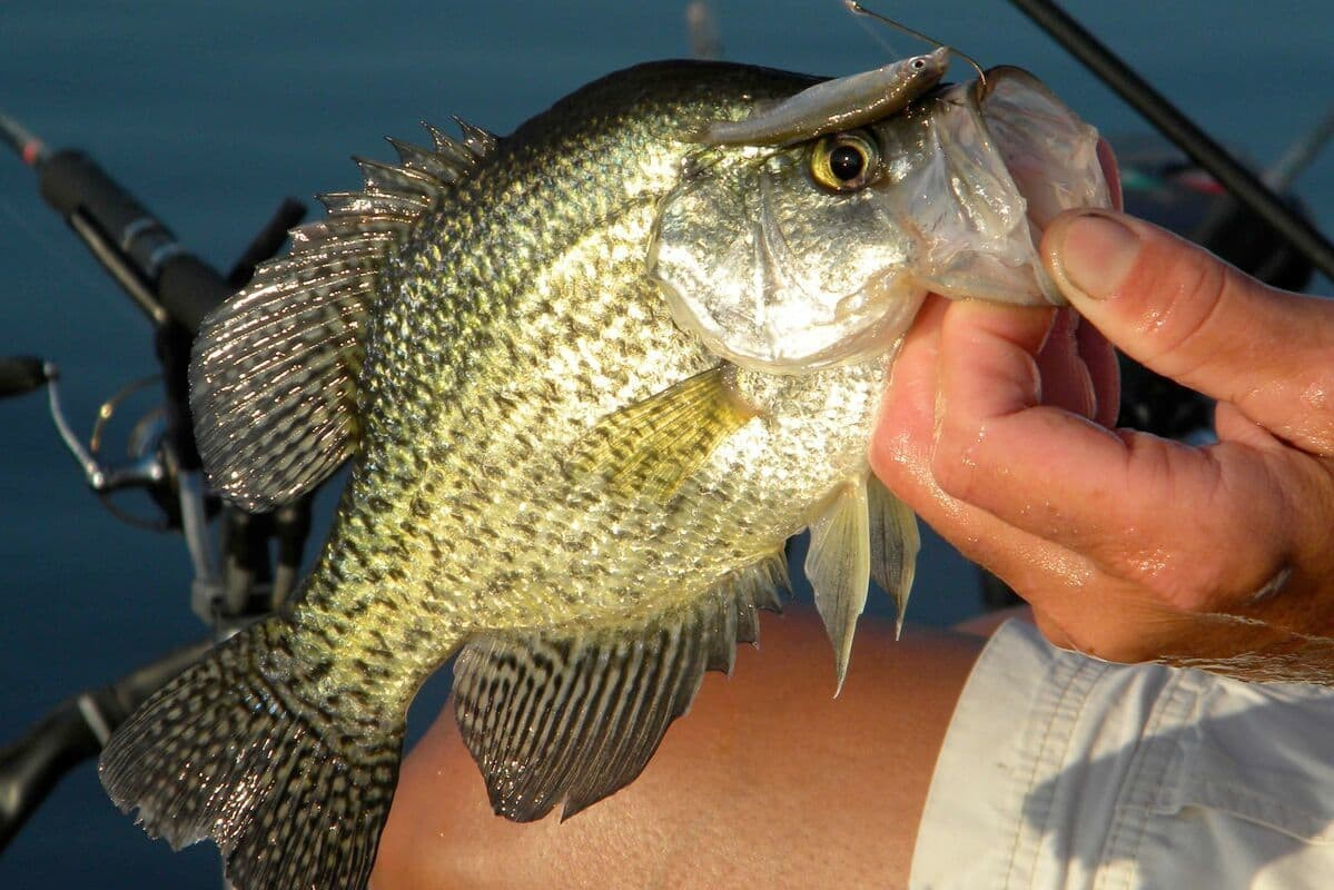Patterning Cooling-plant Lake Black Crappies - MidWest Outdoors