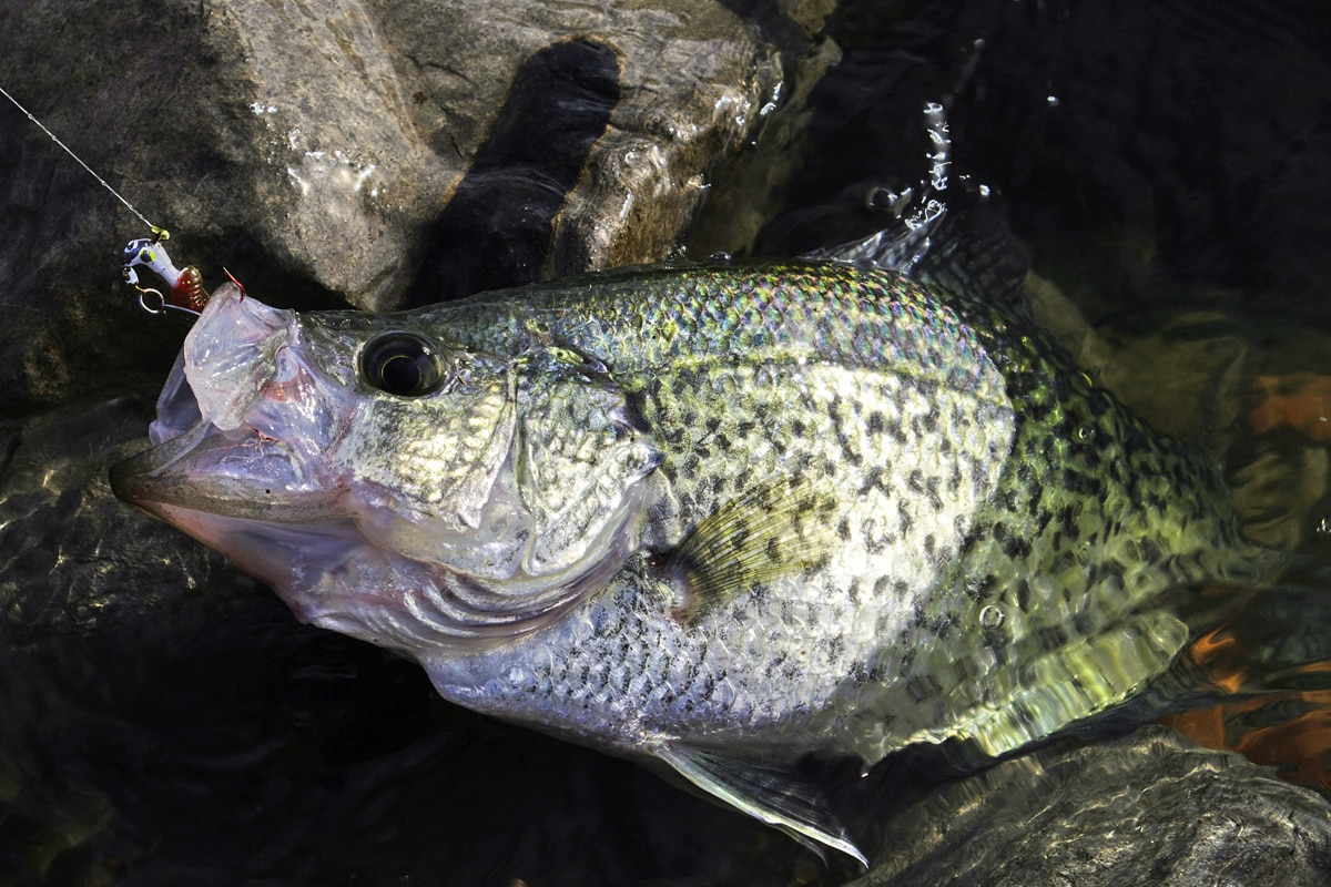 Casting Crappie Lures from the Bank