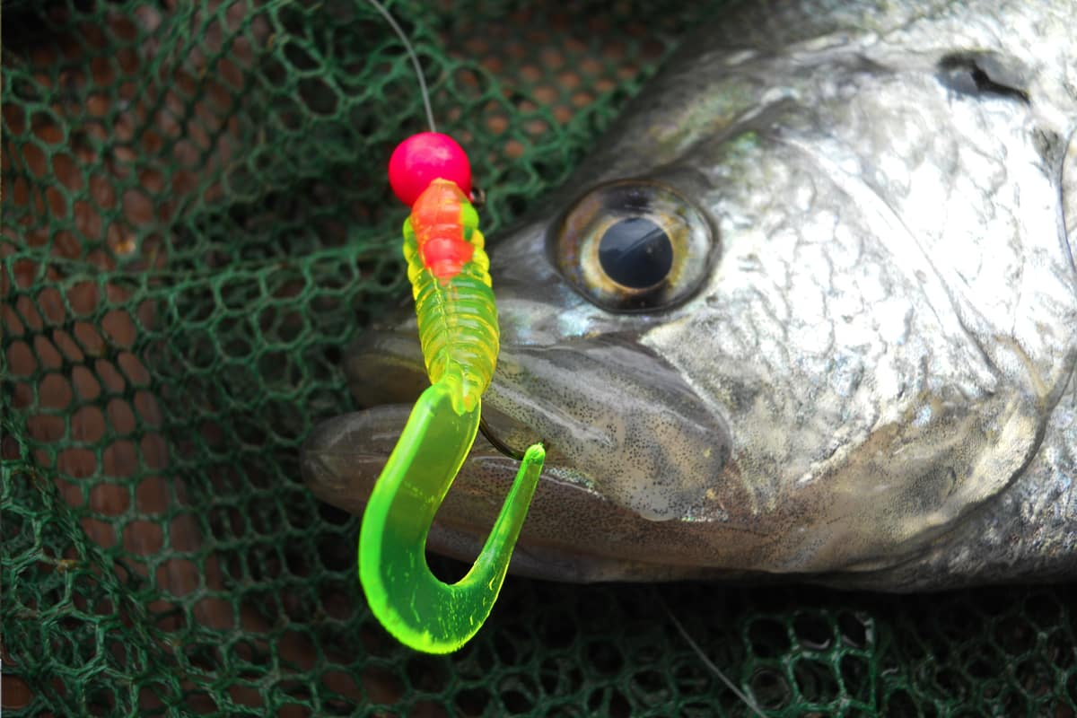 Springtime Speck-tacular Methods - MidWest Outdoors