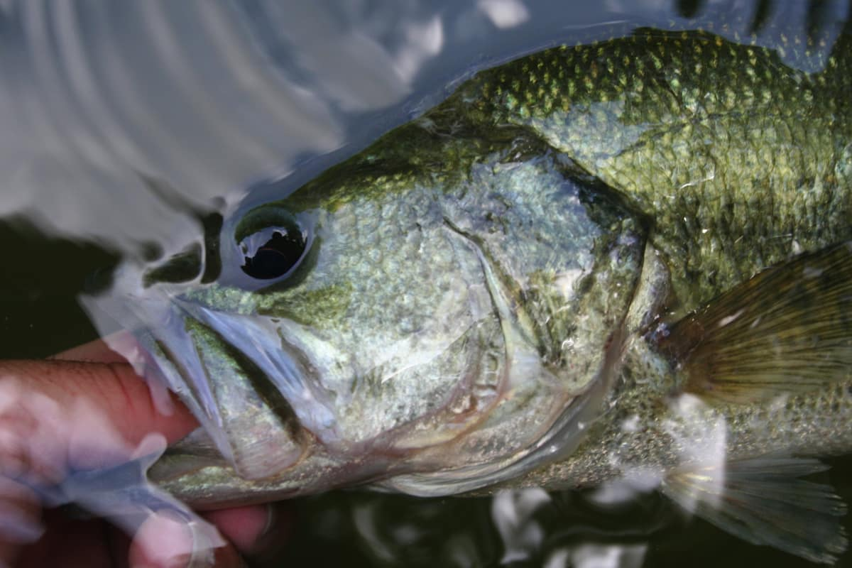 Fishing the multi species lake of the ozarks midwest for Crappie fishing lake of the ozarks