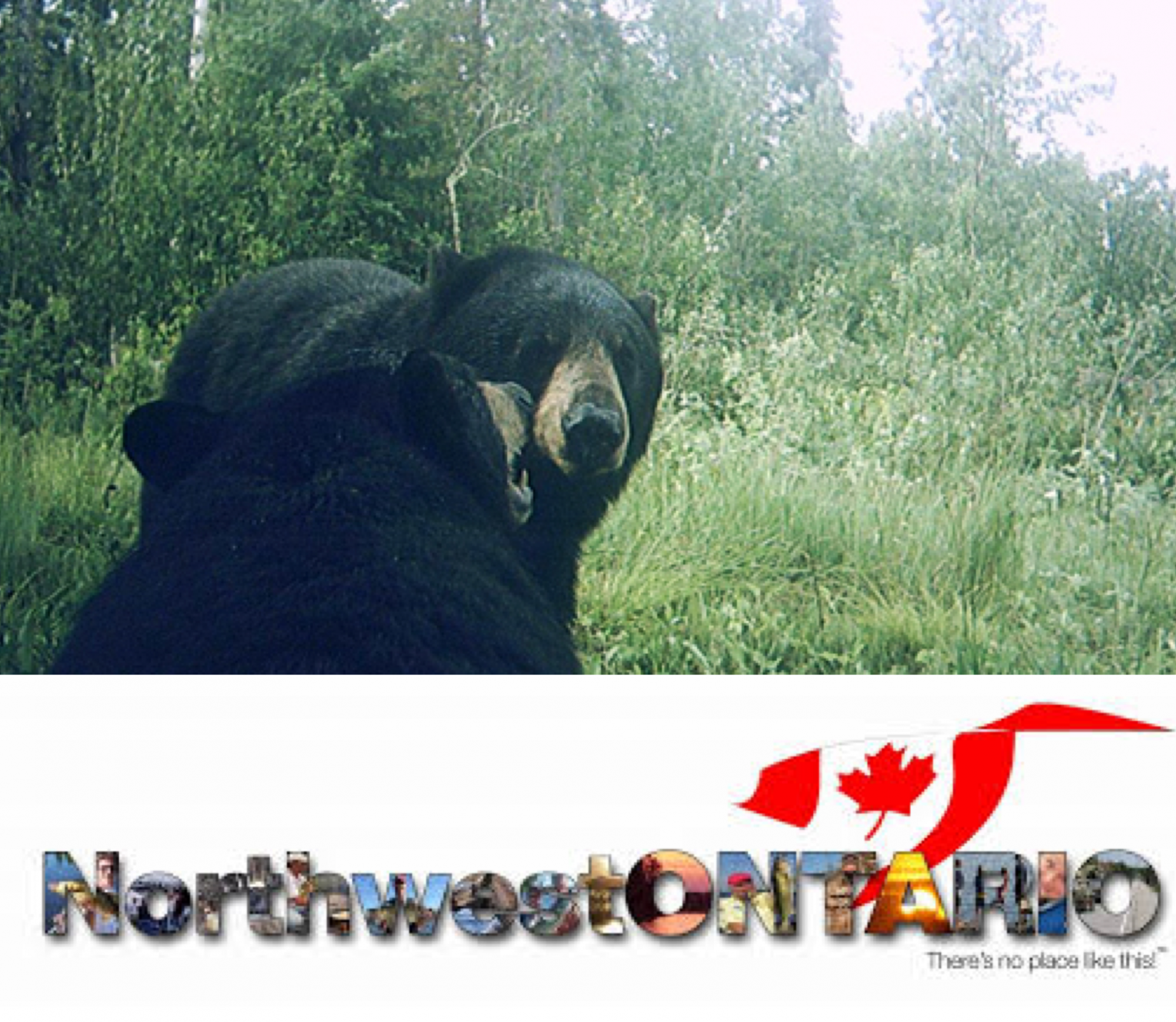 NorthWest Ontario Bear Hunting