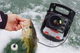Large bass freshly caught on slender spoons from under the ice.