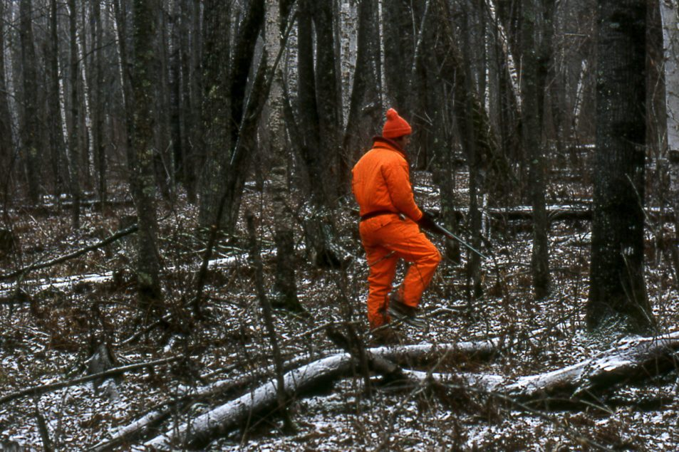 Deer hunter in orange moving quietly through the woods.