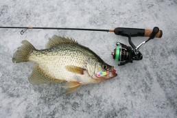 ice fishing jigs | best panfish ice jigs | top ice fishing jigs | best ice fishing jigs | Best ice jig colors