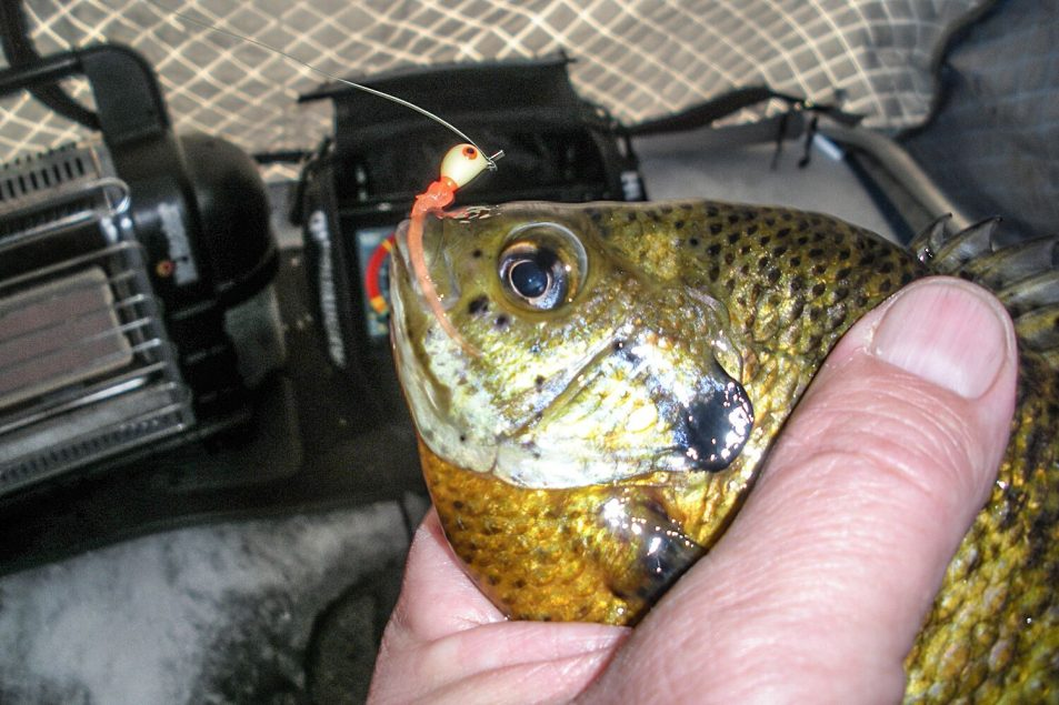 ice fishing | Ice fishing soft plastics | Ice fishing Bluegill | Ice fishing crappies | Panfish ice fishing