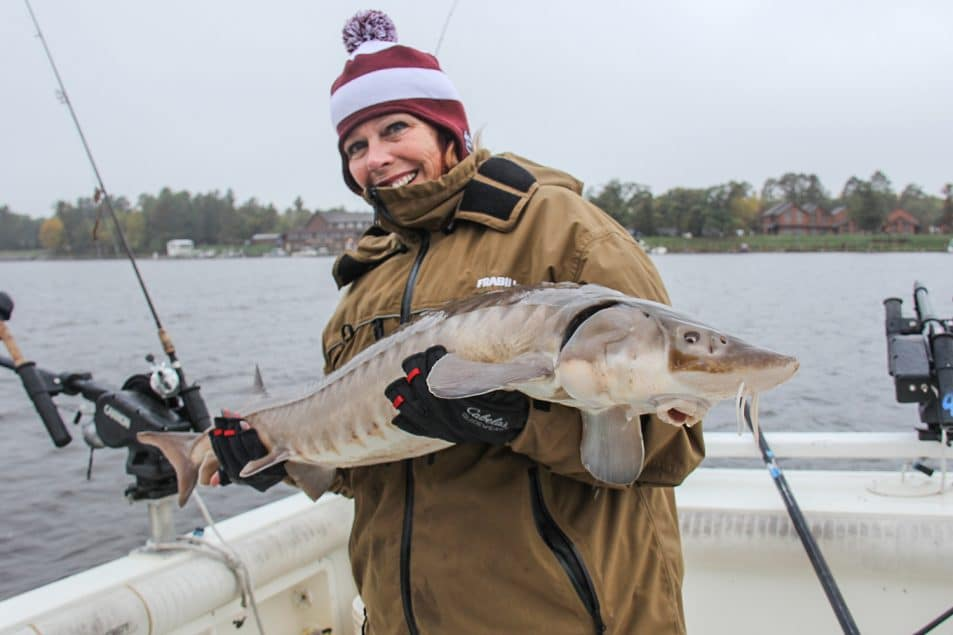 Midwest Sturgeon fishing | where to catch sturgeon | Big Sturgeon fishing | Sturgeon Fish information | How to catch sturgeon