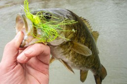 River Smallmouth on Spinnerbaits