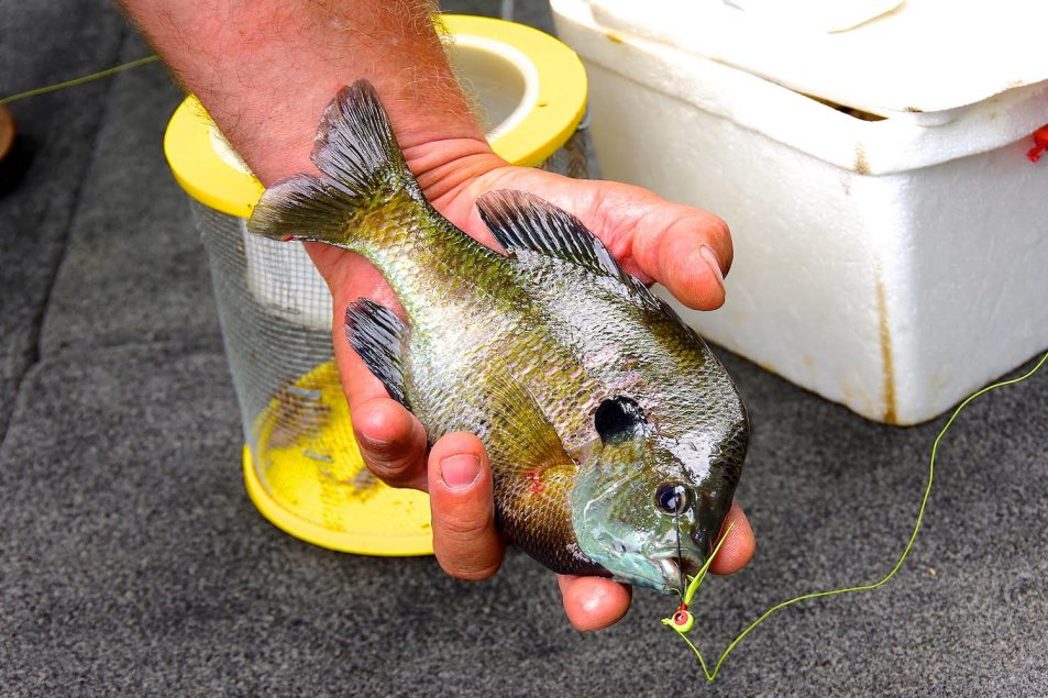 summer bluegill fishing tips | Summer bluegill fishing patterns | How to catch bluegill during summer | bluegill Fishing July | Summer bluegills