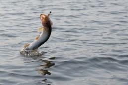 Fishing Industry Shakeups